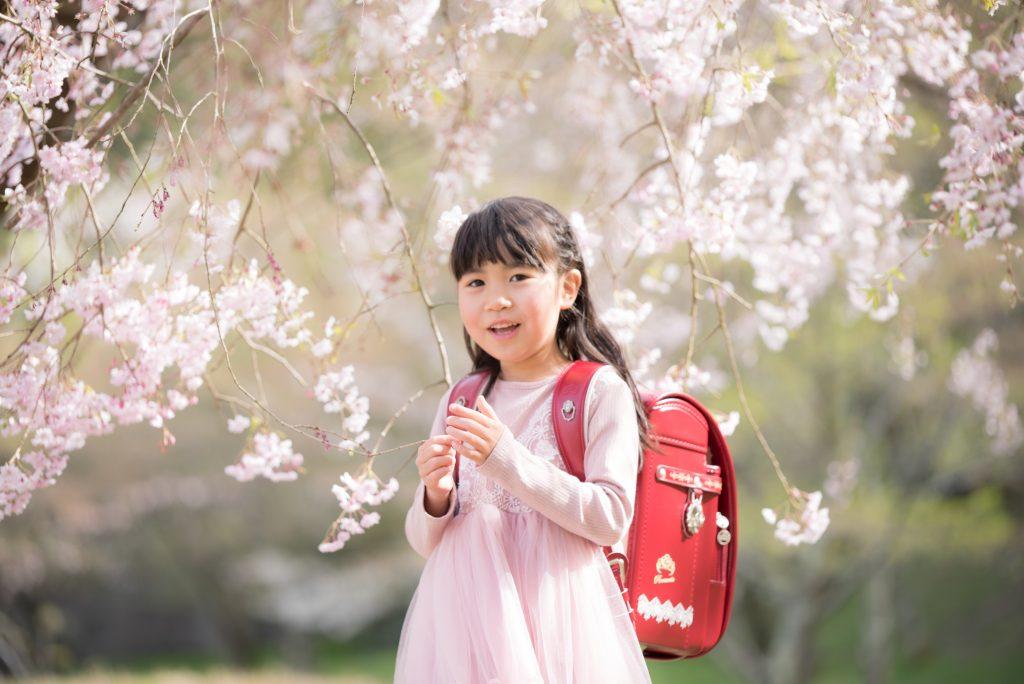 石川県桜の下での入学写真